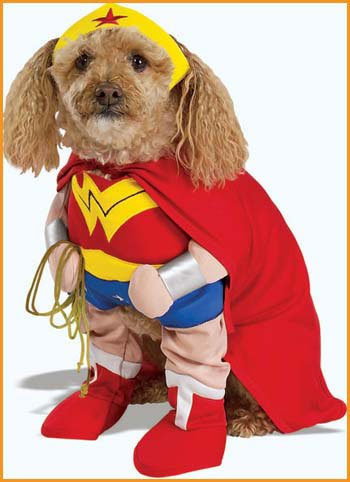 A Wonder Woman costume for pets